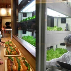 A Japanese Subway sandwich shop has started growing hydroponic lettuce right in the middle of the store! Not only is this hyper-local lettuce healthy, it's a great visual centerpiece for the space.  Read more: Subway in Japan Grows Hydroponic Lettuce to Top Their Foot Longs   Inhabitat - Green Design Will Save the World