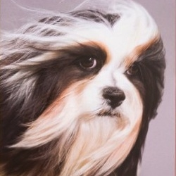 Kate Lacey's 'Show Dogs: A Photographic Breed Guide' is a look at dog breeds, helping you discern your favorite pooch in a pop art manner.