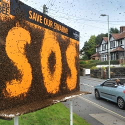 A billboard and 100,000 bees have been creating a buzz in Devon. The bees spell out SOS - Save Our Swarm - in what is thought to be the world's first billboard 'written' entirely by bees.