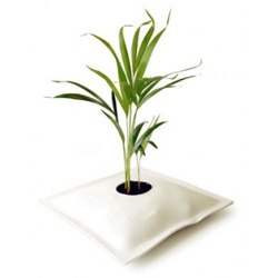 Martino D'Esposito Grow Bag - pillow shaped pot for plants made of PVC foam. Exclusively for hydroculture friendly plants.