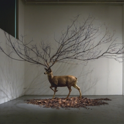 Myeongbeom Kim produces otherworldly installations and sculpture that juxtaposes man-made elements with nature to create surreal dream spaces.