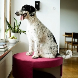 Neroko - Sustainable Scandinavian Design for dogs!
