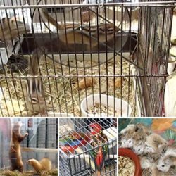 Video of the critters i found at a sunday morning flower/bird outdoor market ~ chipmunks, chinchillas, birds of all sorts, piles of guinea pigs, hamsters, ferrets, and more!