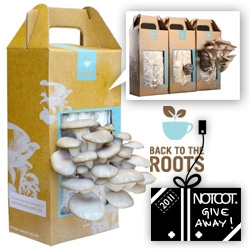 NOTCOT Holiday Giveaway#17: Back To The Roots Grow Your Own Mushroom Kits! Just spray some water daily, and in a few days you have a big batch of Oyster Mushrooms (grown in recycled coffee grounds!)