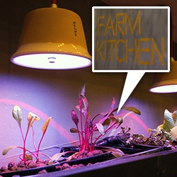 Microagriculture in your own home? Bringing hydroponics, algae tubes and more into the kitchen at Farm Kitchen at 100% Design. Amazing installation designed by mette.