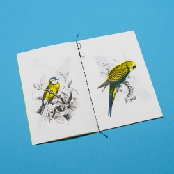 A Book of Birds, limited edition multicolor Risograph printed book, singer sewn, with images from the Biodiversity Heritage Library.