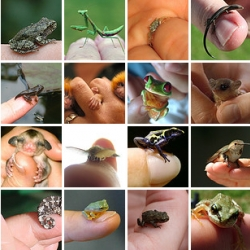 "Impressive flickr set ""Tiny Animals on Fingers"""