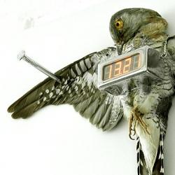 Michael Sans cuckoo clock as seen on DesignSpotter.
