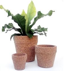 Vaso's 2.0 Cork Pots!