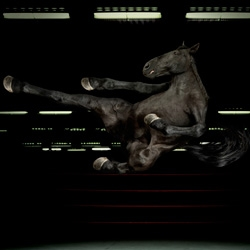 Kung-fu horse by Alex Howe [Editor's Note: his other animal pics are awesome too!]