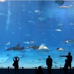 Beautiful video of Kuroshio Sea - 2nd largest aquarium tank in the world