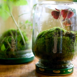 Lovely FOUND terrariums How-To over at Design Sponge!