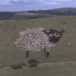Sheep herded to make shapes, a pong game, the Mona Lisa, and fireworks!