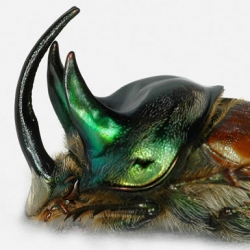 Stunning NYTimes slideshow of Beetles Weaponry!