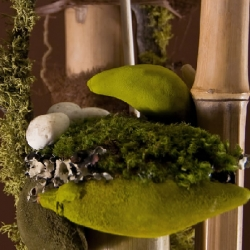 San Francisco's Ixia is a floral design studio that uses moss, branches and driftwood to create arrangements that fairies could live in. Beautiful stuff.