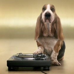 Does your basset hound have beat?  Swedish  Tele2's interactive beatbox.