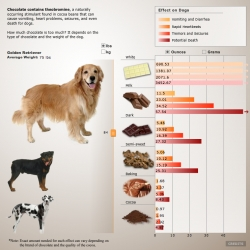 National Geographic's Chocolate Chart ~ fun and interactive, it shows you what how much of each type of chocolate will do to your dog... just slide the slider!