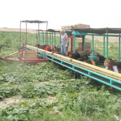 Fascinating look at a contraption for cucumber picking...