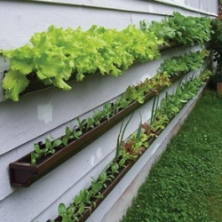 Interesting idea to use rain gutters mounted on siding for layered garden space...