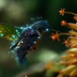 LOVE the CG of the hummingbird for Samsung's new LED TVs by 1st Ave Machine ~ watch the gorgeous video!
