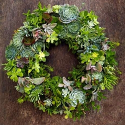 Awesome interview with Flora Grubb of SF ~ she has some incredibly breath taking succulent wreaths, vertical gardens, and more!
