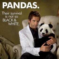 Panda Celebrity, TUGG SPEEDMAN. LOL! I wonder what Ben Stiller has in store for us.