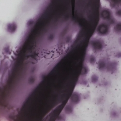 Combine one Canon 30D, an intervalometer, and a microscope, add in a trippy yet soothing soundtrack, and you have this video, called God of Small Things. Tune and trip out this fine afternoon.