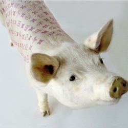Artist Wim Delvoye is a vegetarian who tattoos pigs in the name of art. Check out his varied artful swine.