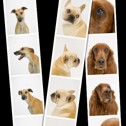 "Dog Photo Booth - ""A personal project by photographer Sharon Montrose who is smitten with dogs and photobooth strips"" ~ Gorgeous."