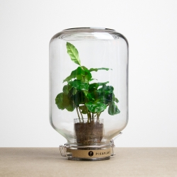 Pikaplant Jar is the plant you never have to water. Because it's hermetically sealed it continuously recycles the water and air inside its biotope.