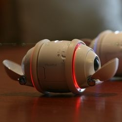 Aibo robot dog + Mp3 walkman = Sony Rolly? What a bizarre little offspring...