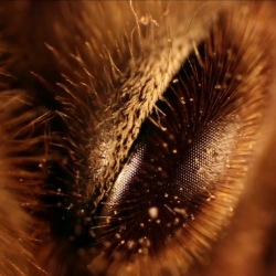 Plant Study by Kurt Kaminski showcases beautiful biology, collected around Los Angeles and filmed under a microscope.