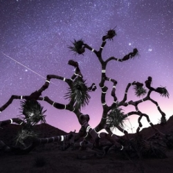 Los Angeles artist Jeff Frost scours the planet looking for abandoned buildings, dead trees and other beautiful  desolate places where he can execute his stop motion and time lapse photography.