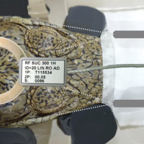 What Scientists Saw When They Put a Crocodile in an MRI Scanner and Played Classical Music