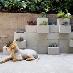 Stacked cinder blocks as a planter wall of succulents!