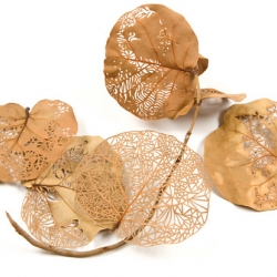 Beautiful cut leaves from Jen Stark.  So delicate and complex in the simplest way.