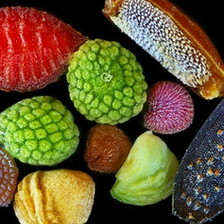 'Seeds of wild flowers' microscopic image by Yanping Wang from the Beijing Planetarium. Part the NY Times 'Microscopic View' slideshow.