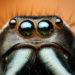 Thomas Shahan - Macro photography