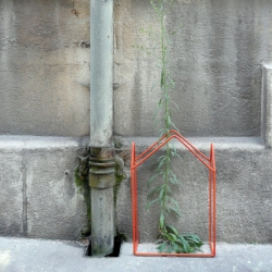 """""""Urban Greenhouses"""": this project helps plants that naturally grow in the city."""