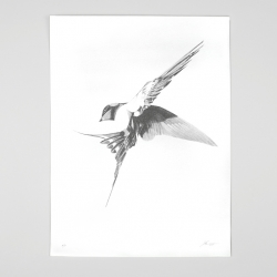 'Flight 06' is the brand new release from London artist Von. Silver screen-print in strict edition of 60. Each print signed and numbered by the artist.