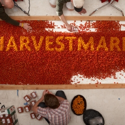 It took 40,000 cherry tomatoes for Caspian Michalowski and Kevin Sullivan to create this sculpture of the HarvestMark logo.