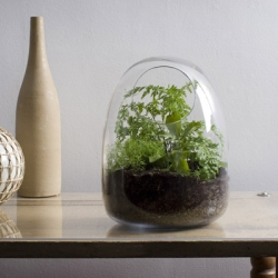Hand-blown glass terrariums from Bevara Design.