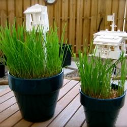 LEGO Grass Planters based off the LEGO Park Planter idea.