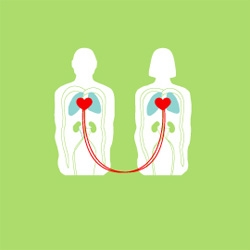 The perfect somethin' somethin' for your valentine. Hybrid-Home Limited Edition Print Anatomical Green by Dora Drimalas!
