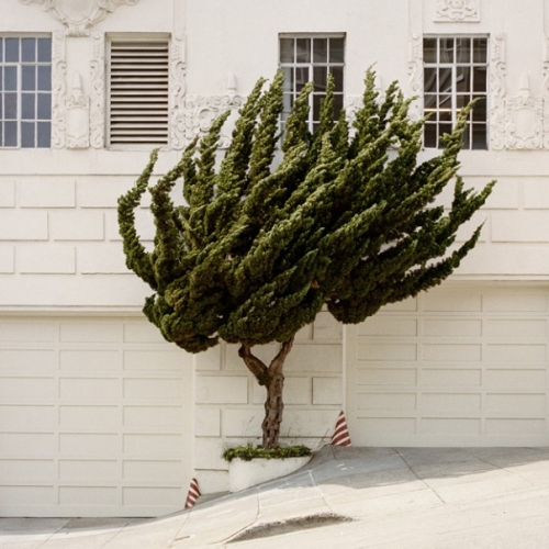 California Topiaries, a series by photographer Marc Alcock.