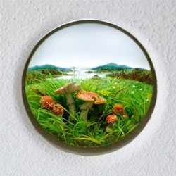 Beautiful dioramas by Patrick Jacobs.