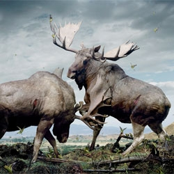 Simen Johan's beautiful animal portraits.