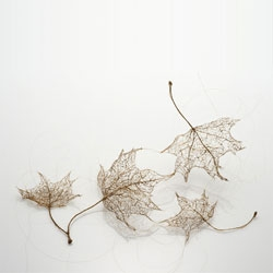Delicate leaf skeletons created by Jenine Sheroes from human hair!