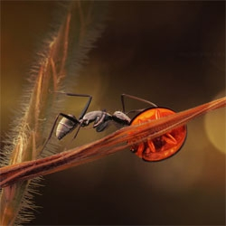 Stunningly beautiful macro photographs of insects by Lee Peiling.