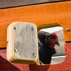 Mobile reclaimed cedar chicken coops from moderncoop.  By Wright Design Office.